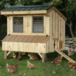Chicken Coops Designs