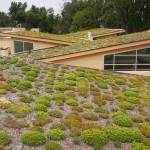 Green Roofing Options Your Home