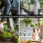 Home Have Collected Mini Indoor Garden Ideas Green Your