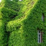 Make Your Home Greener Steps Rivertea Blog