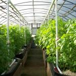 Make Your Personal Greenhouse