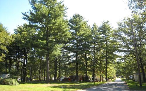 Pine Grove Mobile Home Park Located Quaint Area