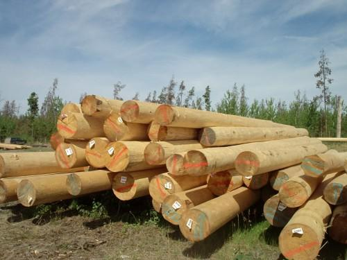 Superior Logs High Mountain Log Homes Uses Some Best Trees